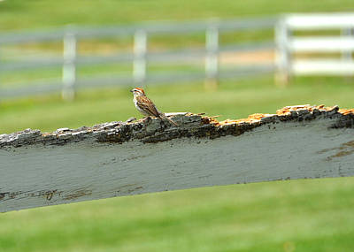Photograph - Pasture Birdie by JAMART Photography