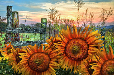 Photograph - Pasture Fence In Sunflowers by Debra and Dave Vanderlaan