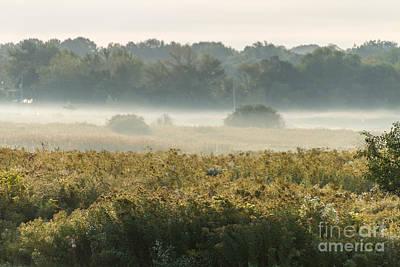 Photograph - Pasture Fog by William Norton