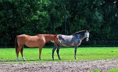 Photograph - Pasture Friends by Cynthia Guinn