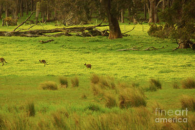 Photograph - Pasture In Boranup by Cassandra Buckley