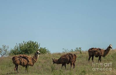 Photograph - Pasture by Iris Greenwell