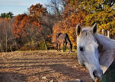 Photograph - Pasture Mates by JAMART Photography