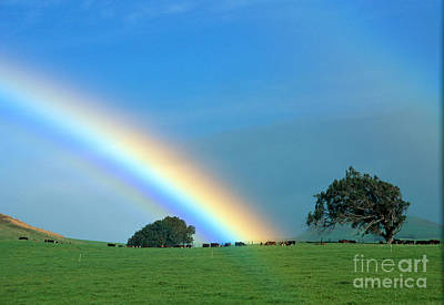 Photograph - Pasture Rainbow by Peter French - Printscapes
