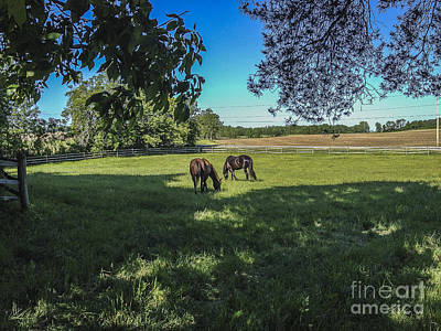 Photograph - Pasture Time by Joann Long