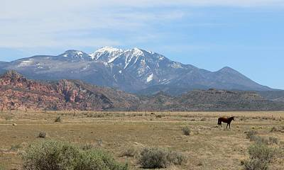 Photograph - Pasture With A View - 4 by Christy Pooschke