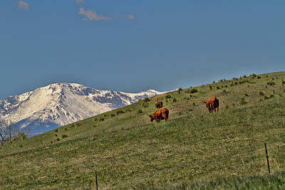 Photograph - Pasture With A View by Alana Thrower