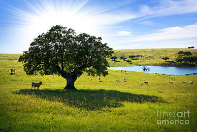 Rural Wall Art - Photograph - Pasturing Cows by Carlos Caetano