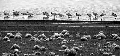 Photograph - Patagonia 04 by Bernardo Galmarini