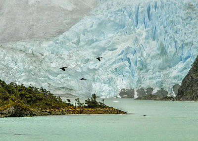 Photograph - Patagonia Glacier by Alan Toepfer