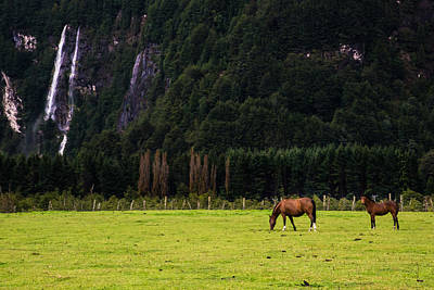Photograph - Patagonia Pasture by Walt Sterneman