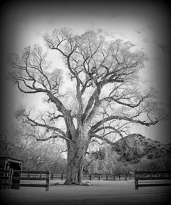 Photograph - Patagonia Tree Vignette by Teresa Wilson