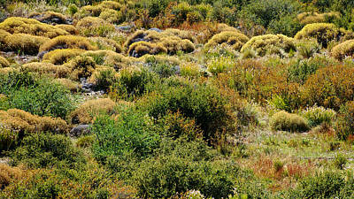 Fragua Photograph - Patagonian Brush And Grasses On La Fragua Ranch Near Bariloche-argentina by Ruth Hager