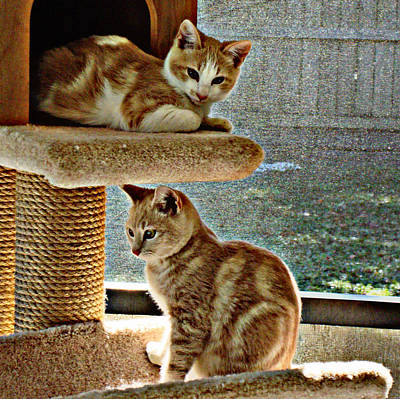 Photograph - Patch And Dom by Bob Johnson