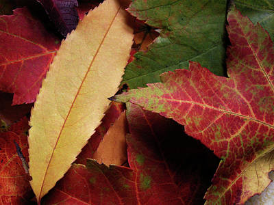 Photograph - Patch Of Color In Autumn by Nancy Griswold