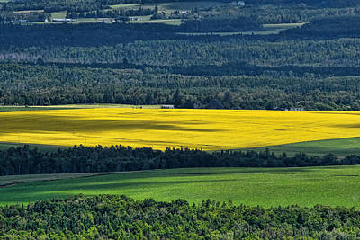 Art Print featuring the photograph Patch Of Yellow by Gary Smith