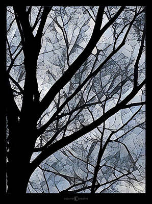 Photograph - Patchwork Branches by Tim Nyberg