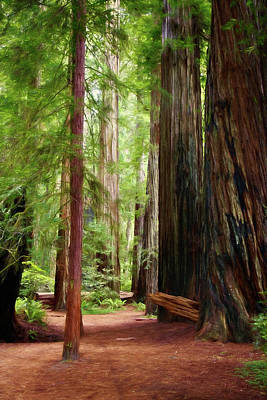 Photograph - Path Among Giants by Lana Trussell