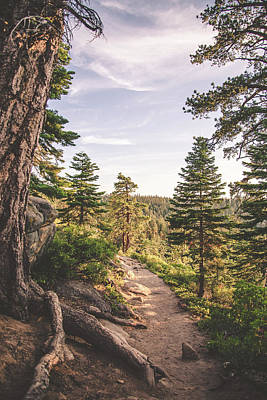Photograph - Path From Sentinel Dome by Tracie Moore