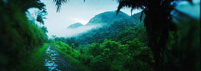 Path In A Rainforest, Cayo District Art Print by Panoramic Images
