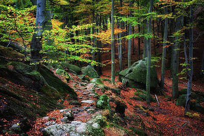 Photograph - Path In Autumn Forest Picturesque Scenery by Artur Bogacki