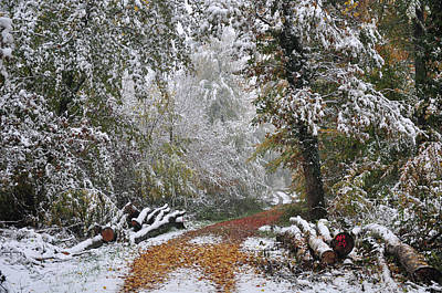 Photograph - Path In Autumn Woods Covered With Snow by Martin Stankewitz