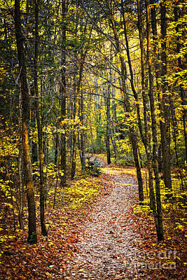 Path Photograph - Path In Fall Forest by Elena Elisseeva