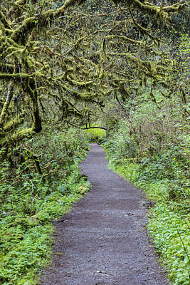 Photograph - Path In Oregon Forest by John McGraw
