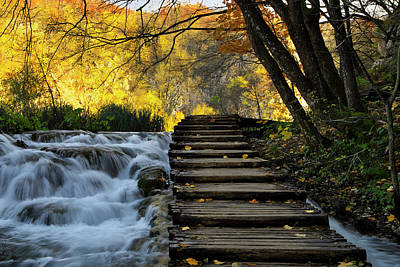 Photograph - Path In Plitvice by Ivan Slosar