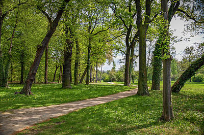 Photograph - Path In Sans Souci by Endre Balogh