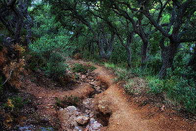 Path In Spooky Forest Art Print by Artur Bogacki