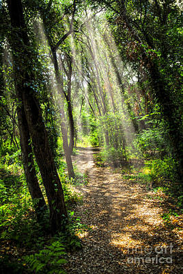 Landscapes Royalty-Free and Rights-Managed Images - Path in sunlit forest by Elena Elisseeva