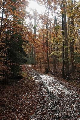 Path In The Autumn Color Art Print by Hideaki Sakurai