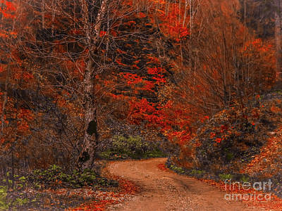 Photograph - Path In The Forest by Claudia M Photography