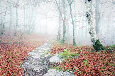 Path In The Forest Art Print