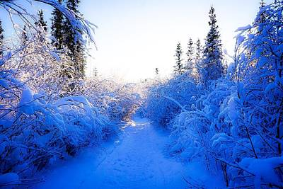 Photograph - Path In The Snowy Woods 1 - Inuvik by Desmond Raymond