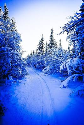 Photograph - Path In The Snowy Woods 2 - Inuvik by Desmond Raymond