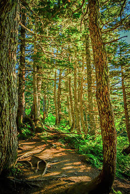 Path In The Trees Art Print