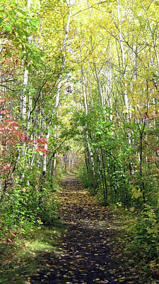 Photograph - Path In The Woods 3 by Emma Frost