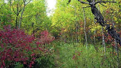 Photograph - Path In The Woods 8 by Emma Frost