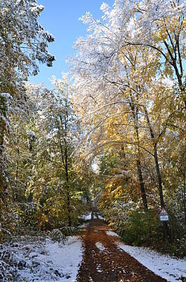 Photograph - Path In The Woods, Autumn Leaves And Early Snow by Martin Stankewitz