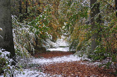 Photograph - Path In The Woods, Autumn Season With Early Snowr by Martin Stankewitz
