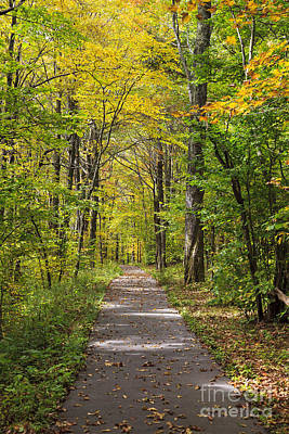 Photograph - Path In The Woods During Fall Leaf Season by Jill Lang