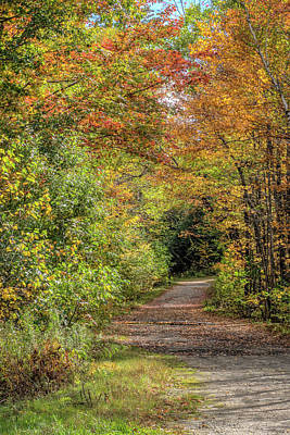 Photograph - Path Into The Wood by Jane Luxton