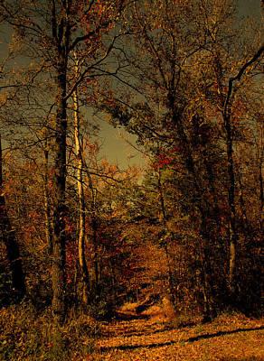 Path Into The Woods Art Print by Nina Fosdick