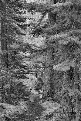 Photograph - Path Of Tranquility Black And White by Adam Jewell