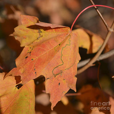 Photograph - Path Through A Leaf by Alana Boltwood