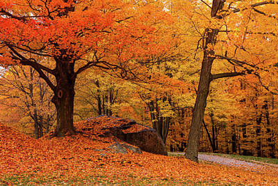 Photograph - Path Through New England Fall Foliage by Jeff Folger