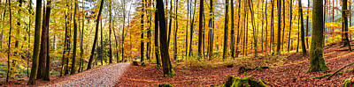 Taunus Photograph - Path Through Paradisal Forest by Mah FineArt