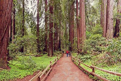 Path Through The Bohemian Grove At Muir Woods National Monument - Marin County California Print by Silvio Ligutti